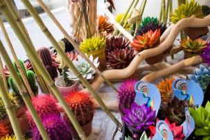 Saksijske biljke i cveće