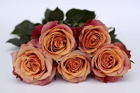 Najlepše cveće za 8. mart