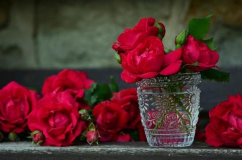 Najlepši poklon za sve prilike - crvene ruže