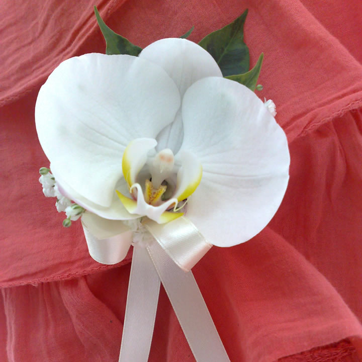Cvet za ruku penelopsis orhideja