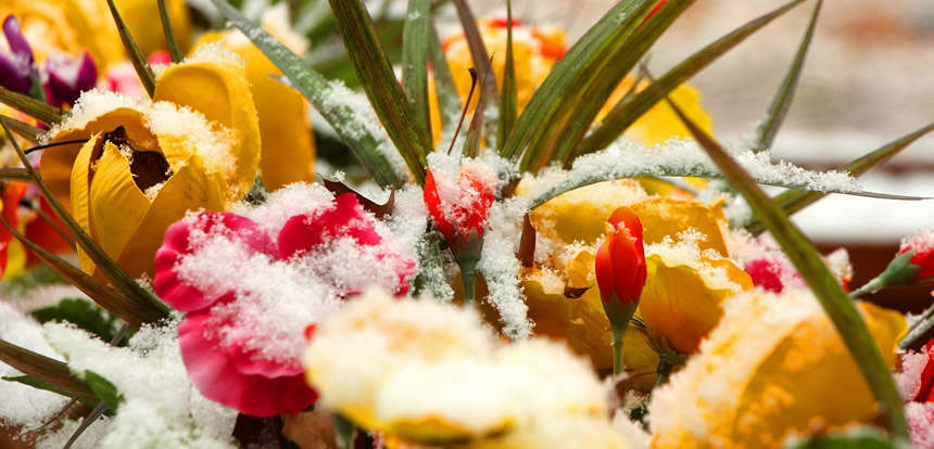 Cveće za zimu