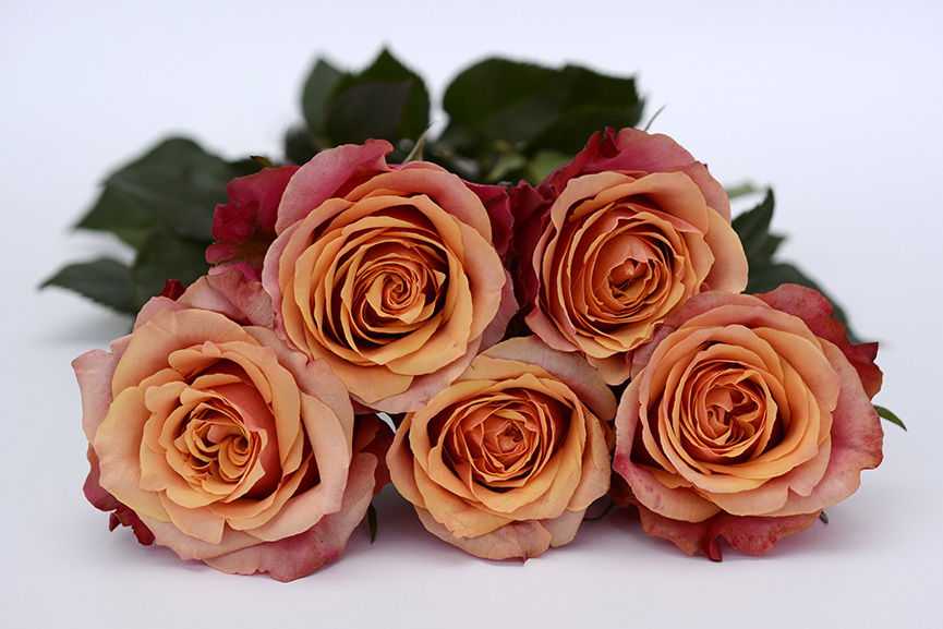 Ruže za 8. mart