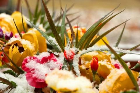 Vedre boje za dane bez sunca: cveće za zimu