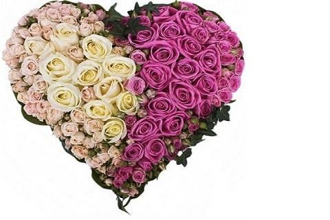 Ruža je kraljica među cvećem, a 101 ruža među poklonima