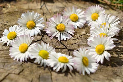 Izaberite najlepše cveće za rođendan po mesecu rođenja