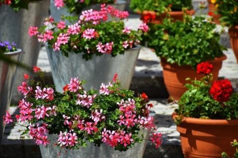 Ukrasno cveće – tajni sastojak svake terase