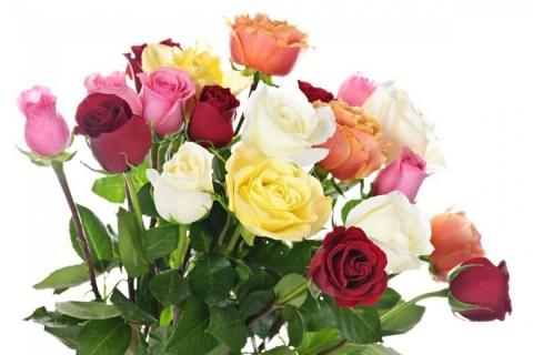 Šta boja cveća poručuje?