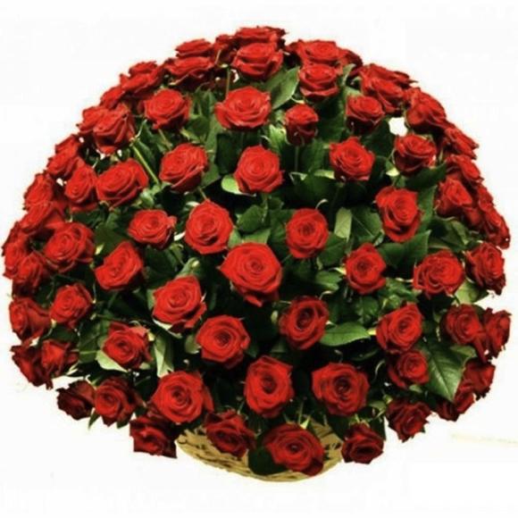101 crvena ruža