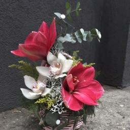 Cvetni aranzman amarilis i Orhideje